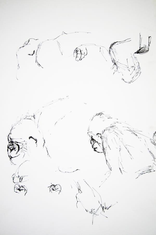 zoo13-claudiastrohm-stuttgart